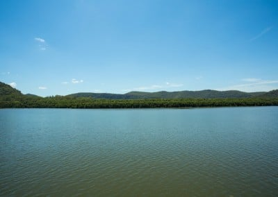 Mangroves on the Hawkesbury River